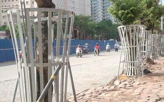 Video: Hàng cây sưa ở Hà Nội 'mặc áo giáp sắt' để chống trộm