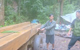 Video: Bắt đối tượng cầm đầu đường dây khai thác gỗ trong rừng nguyên sinh Đắk Lắk