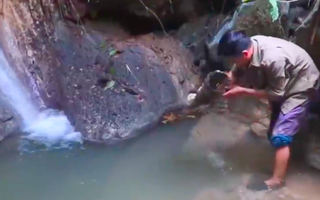 Video: Lội ngược dòng săn tôm suối ở Tuyên Quang