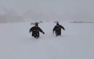 Video: Tuyết bất ngờ rơi dày 70cm trên thảo nguyên Bayanbulak
