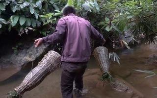 Trải nghiệm sinh tồn trong rừng, đan nắn tre bắt cá bống suối