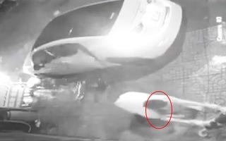 Video: Lái xe ôtô dùng súng điện ăn trộm chó
