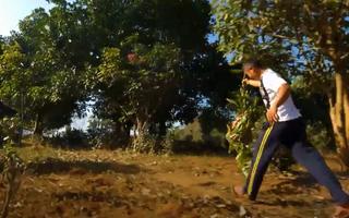 'Chạy đua' săn tổ kiến vàng đầy thú vị ở Myanmar