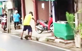 Video: Người đàn ông bị kỳ đà rừng tấn công trên đường phố
