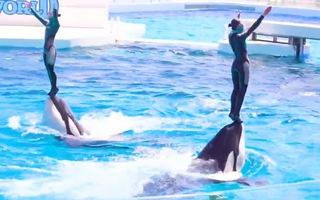 Video: Cá heo dùng miệng nâng người khỏi mặt nước