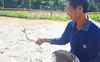 Video: Ngắm đàn cá tự nhiên hàng ngàn con kéo đến trước nhà dân 'ăn nhờ ở đậu'