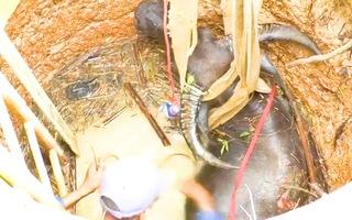 Video: Bơm nước xuống giếng sâu để giải cứu con trâu hàng trăm kg