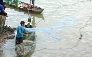 Video: Đua nhau săn cá lăng trên sông Cái Vừng