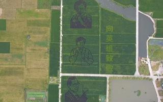 Video: Tạo hình 3 'người hùng' chống dịch COVID-19 trên cánh đồng