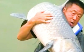 Video: Cần thủ câu được con cá trắm đen 'khủng' gần 75kg