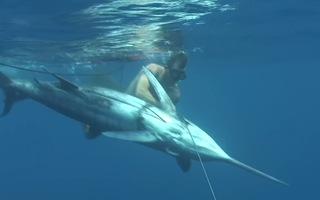Video: Mạo hiểm lặn sâu 20m săn cá cờ xanh nặng kỷ lục thế giới