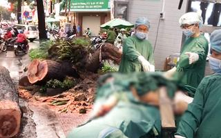 Video: Người đàn ông bị cây xanh ngã đổ đè lên người đã qua đời