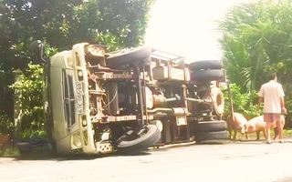 Video: Xe tải chở heo bị lật giữa đường