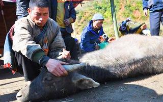 Video: 200 con trâu, bò chết vì rét; Sắp đón đợt lạnh mạnh
