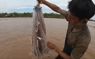 Độc đáo cách 'săn' cá đối theo thủy triều lên của người Khmer