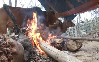 Video: Người dân đốt củi sưởi ấm cho trâu bò ngày giá rét