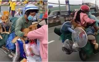 Video: UBND tỉnh Cà Mau yêu cầu báo cáo vụ '13 con chó bị tiêu hủy' trước 10h ngày 11-10