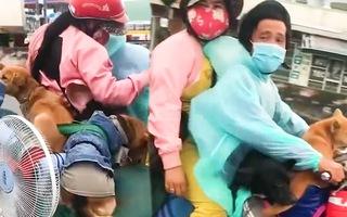 Video: 13 con chó của đôi vợ chồng hồi hương tránh dịch đã bị tiêu hủy