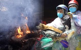 Video: Chủ tịch huyện Trần Văn Thời thông tin chi tiết vụ tiêu hủy đàn chó tại khu cách ly
