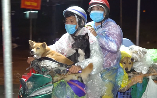 Video: Sau vụ tiêu hủy đàn chó, mèo ở Cà Mau, trưởng trạm y tế xã xin nghỉ việc vì 'cư dân' mạng xúc phạm?