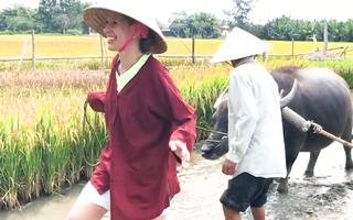 Video: Những chú trâu vui vẻ ở Hội An