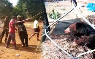 Video: Nghẹt thở giải cứu con gấu rơi xuống giếng ở Ấn Độ