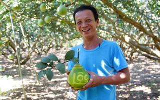 Video: Về làng bưởi nức tiếng đất Biên Hòa, thăm vườn bưởi Tài – Lộc