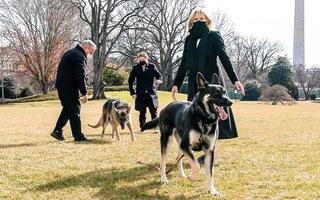 Video: Chó cưng của Tổng thống Biden bị 'trục xuất' khỏi Nhà Trắng