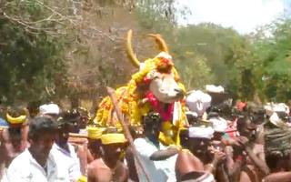 Video: Hàng trăm người dự tang lễ con 'bò ngôi sao' ở Ấn Độ