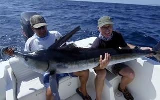 Săn cá cờ sọc, một trong những loài cá nhanh nhất đại dương
