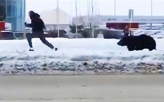 Video: Đang nghe điện thoại, người đàn ông bị gấu rượt 'chạy mất dép'