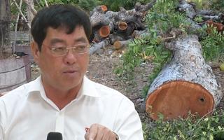 Video: Bí thư Vũng Tàu nhận khuyết điểm 'không tuyên truyền' vụ chặt cây cổ thụ
