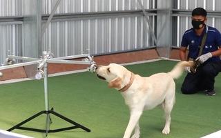 Video: Huấn luyện chó phát hiện vi rút corona trong 2 giây