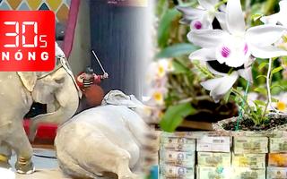 Bản tin 30s Nóng: Lan đột biến 31 tỉ đồng ở Đắk Lắk là trò câu like; Voi xiếc 'đấu vật'