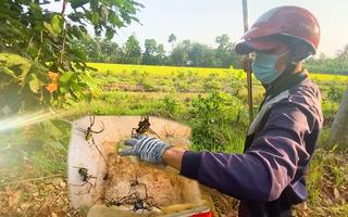 Video: Bắt nhện làm mồi câu cá, thu nhập tiền triệu mỗi ngày