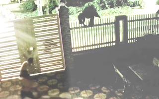 Video: Trộm đột nhập nhà dân, bị truy đuổi còn quay lại xịt hơi cay