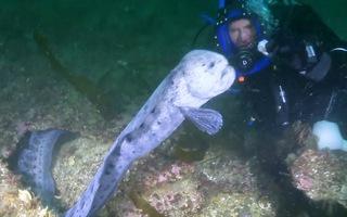 Video: Màn mạo hiểm dụ lươn sói bằng thịt sống
