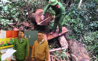 Video: Trạm trưởng trạm bảo vệ rừng bị khởi tố vì để mất rừng