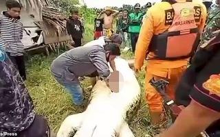 Video: Chuyện rùng rợn ở Indonesia, mổ cá sấu lấy thi thể bé 8 tuổi còn nguyên vẹn