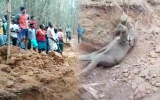 Video: Giải cứu con voi khỏi giếng sâu ở Ấn Độ