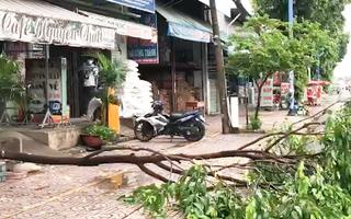 Video: Vừa mở cửa, chủ quán cà phê ở quận 12 bị cành cây lớn rớt trúng người