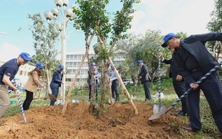 Trồng thêm 50 triệu cây, Đà Lạt – Lâm Đồng kỳ vọng tăng mảng xanh
