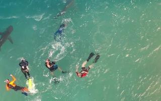 Video: Nơi du khách và hàng chục con cá mập cùng bơi lội