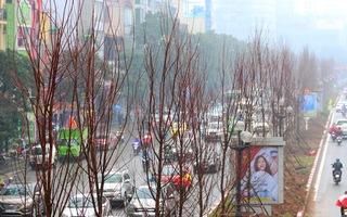 Video: Trồng rồi lại thay toàn bộ cây phong lá đỏ ở Hà Nội