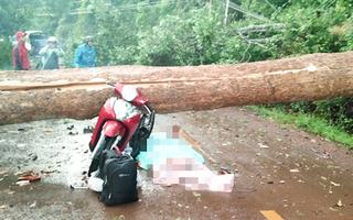 Video: Lốc xoáy quật đổ cây cổ thụ, một phụ nữ đi xe máy tử vong