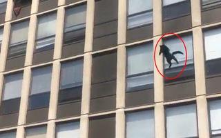 Video: Con mèo nổi tiếng nhờ sống sót khi nhảy từ tầng 5 tòa nhà đang cháy