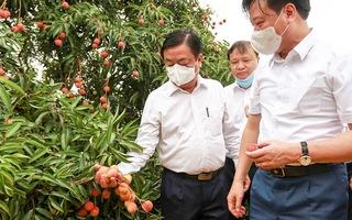Video: Bộ trưởng Lê Minh Hoan đọc thơ, thăm vườn vải Hải Dương