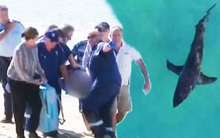 Video: Du khách bị cá mập cắn tử vong khi đang lướt sóng