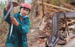 Góc nhìn trưa nay   Mưu sinh bằng nghề bẫy rắn ở miền Tây