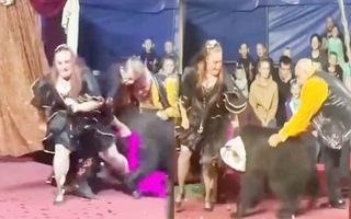 Video: Gấu tấn công nữ huấn luyện viên xiếc trên sàn diễn
